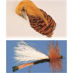 Cuello Faisan Dorado - Bolsa de 10 plumas